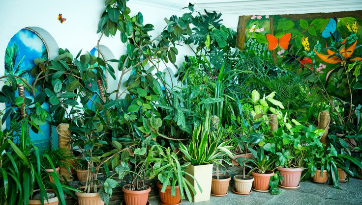 Какие растения выбрать для озеленения в школе
