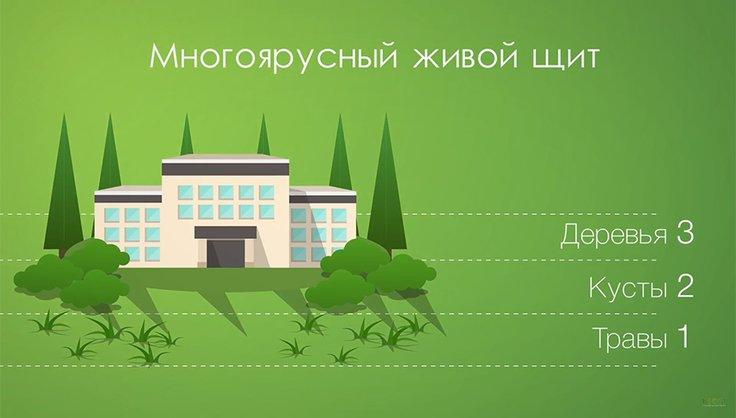 Как организовать озеленение школьной территории