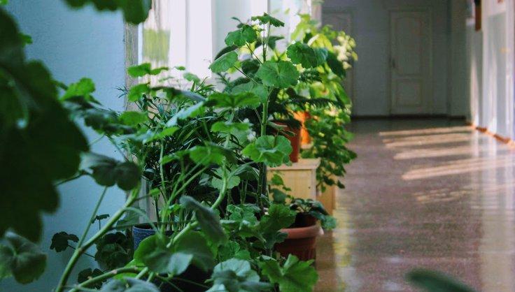 Топ-15 растений для очистки воздуха по мнению NASA