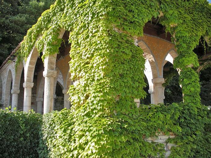 Вьющиеся формы растений, закрывают фасад здания